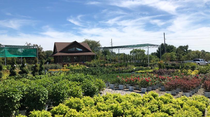 Waldbart Nursery