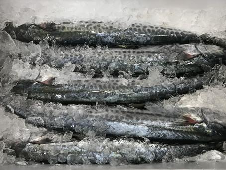 今日の魚たち(^^♪