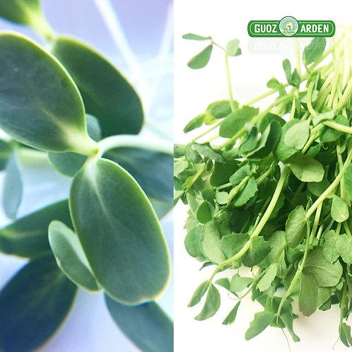 Peashoots & Sunflower Microgreens Mix (4 oz)