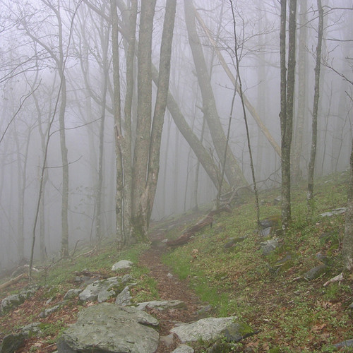14-Foggy-morning-on-the-trail.jpeg