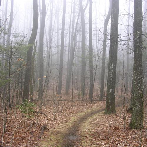 03-Trail-at-three-miles.jpeg