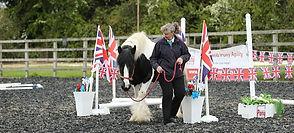 Horse Agility UK clinic