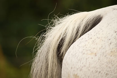 1horse tail.jpg