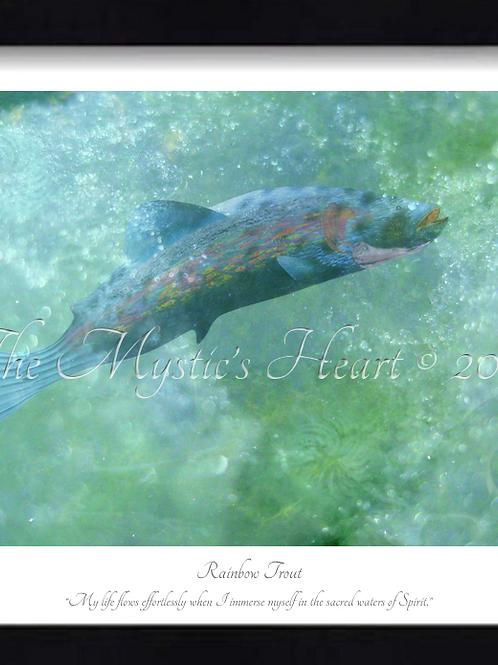 Rainbow Trout 16x12 Framed Giclée Print