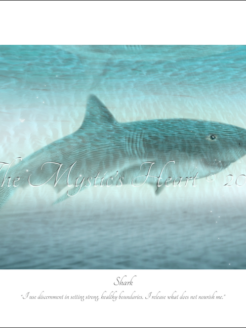 Shark 16x12 Unframed Giclée Print