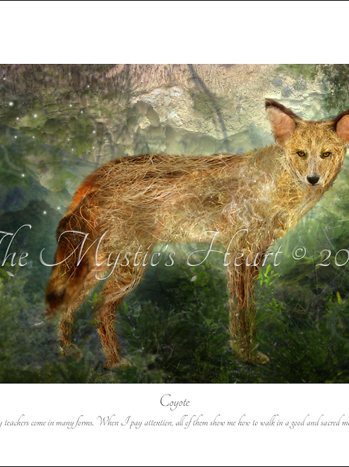Coyote 16x12 Unframed Giclée Print