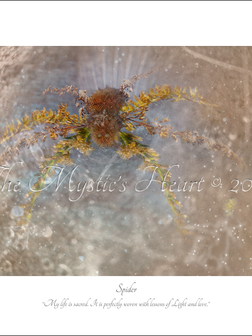 Spider 16x12 Unframed Giclée Print