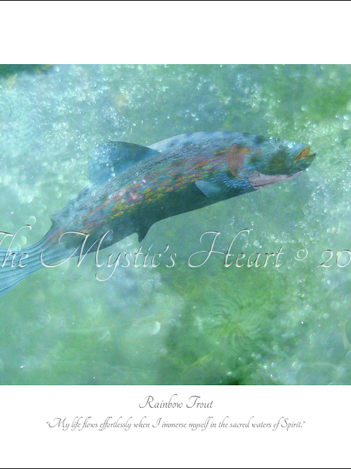 Rainbow Trout 16x12 Unframed Giclée Print