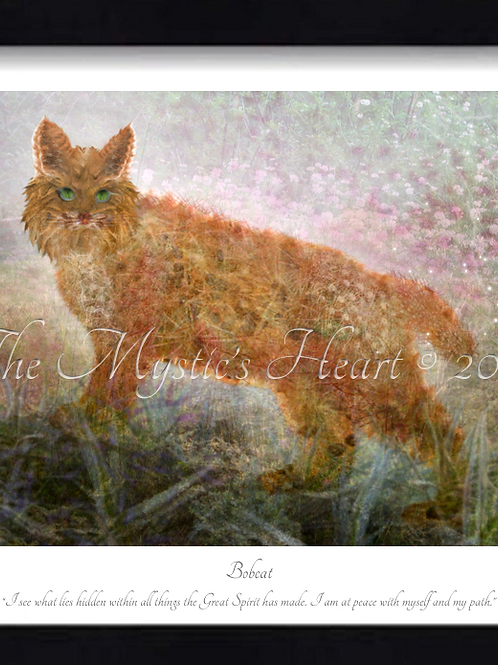 Bobcat 16x12 Framed Giclée Print