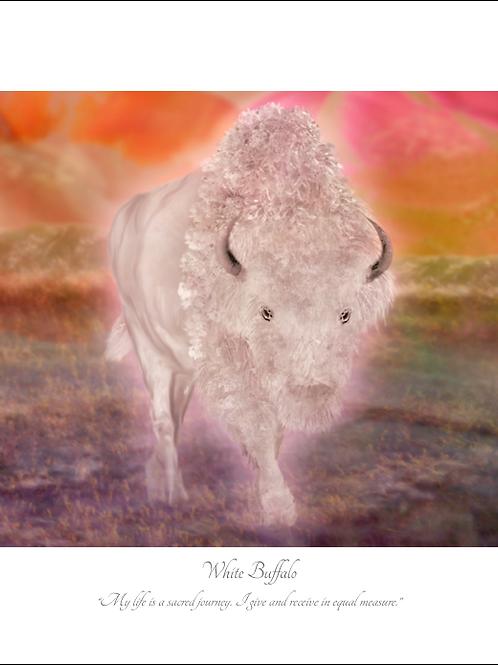 White Buffalo 16x12 Unframed Giclée Print
