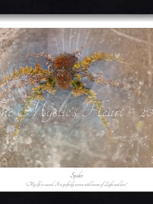 Spider 16x12 Framed Giclée Print