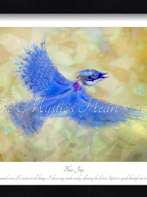 Blue Jay 16x12 Framed Giclée Print
