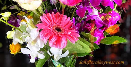 Daisy rose orchid DANS GALLERY.jpg