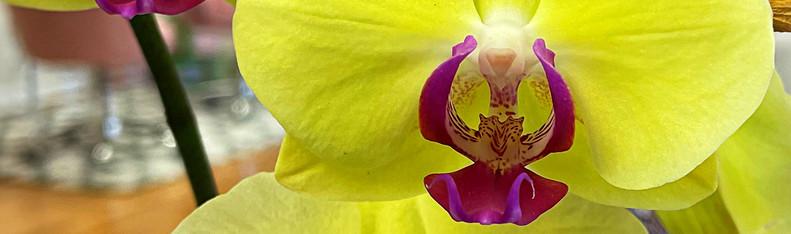 Orchids YellowMagenta DANS GALLERY 210430.jpg