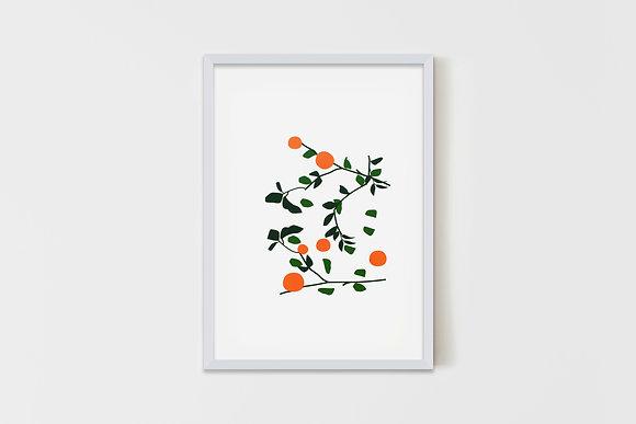 Orange Blossom 50X70 cm