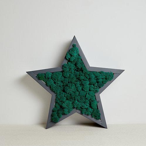 Звезда с карельским мхом