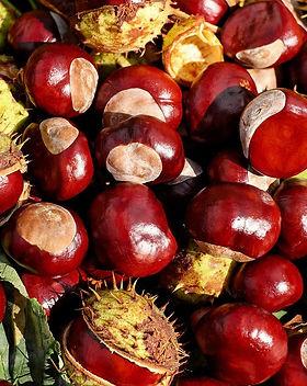 chestnut-1710430_1280.jpg