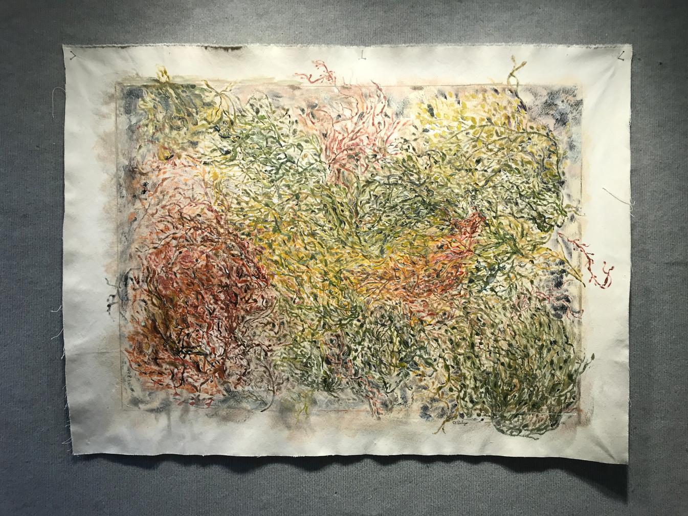 """Caroline Sulzer, """"Rockweed: A Map"""""""