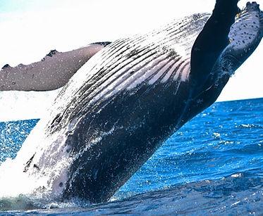 Whale_edited.jpg