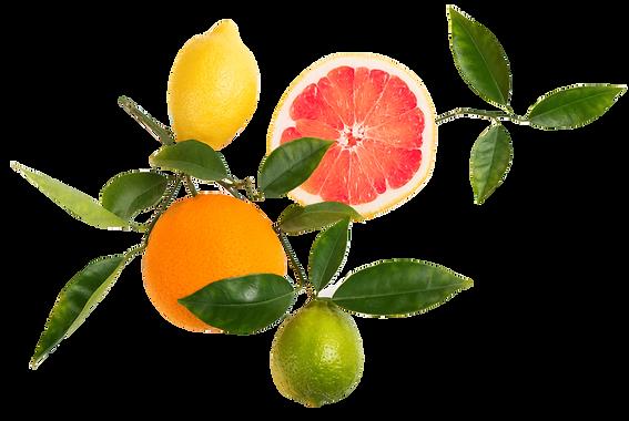 orangelemonlime.png