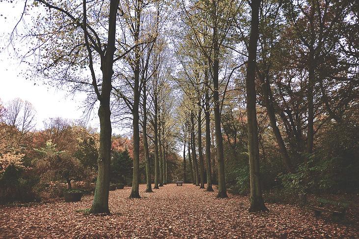 trees3 (1).jpg