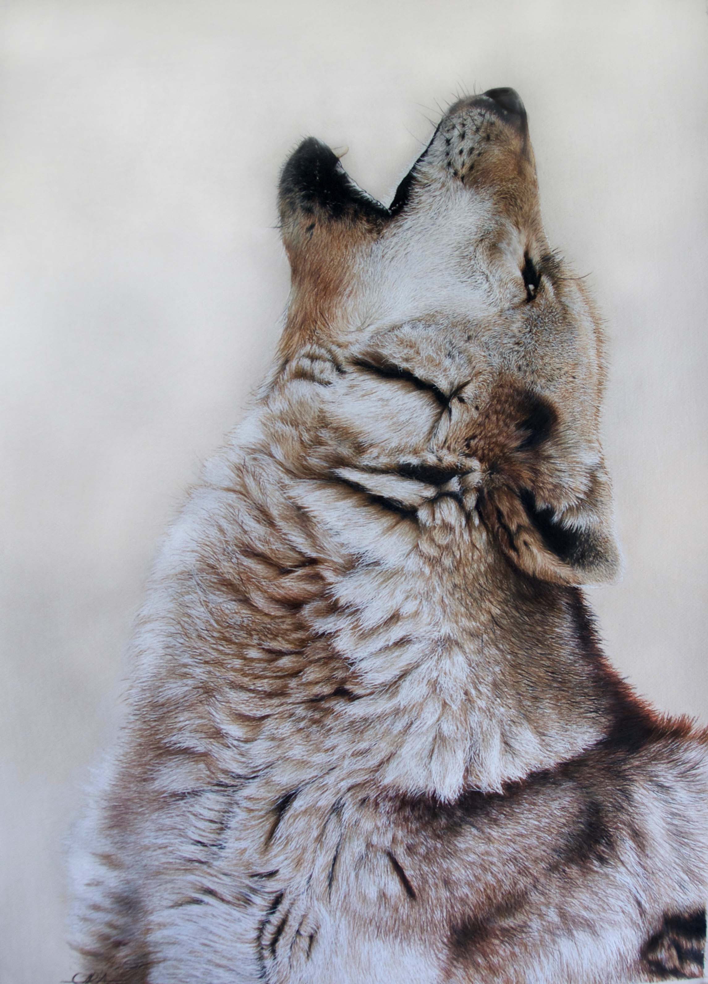 Grey Wolf - Sold