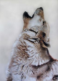 Grey Wolf - Sold