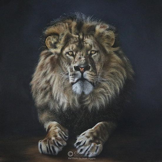 Beautiful King