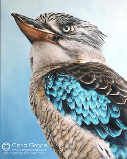 Kookaburra - Sold