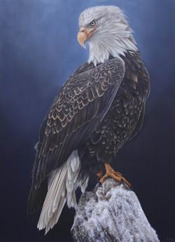 Bald Eagle commission