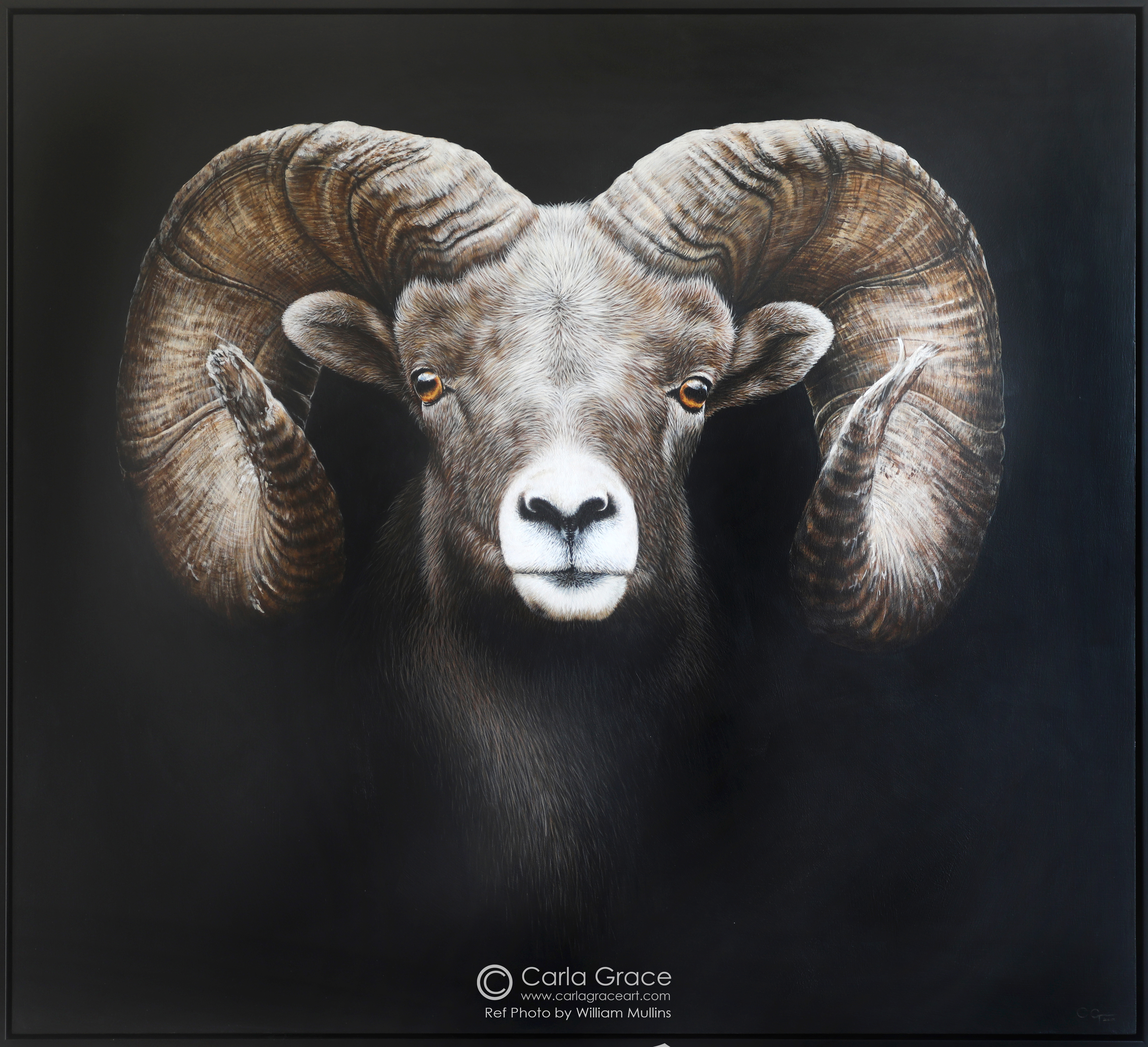 """Majesty"" Big Horned Ram"