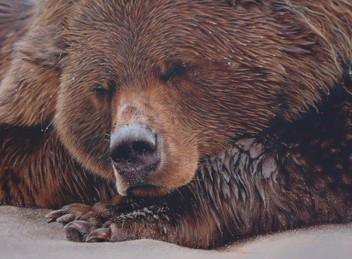 How to Paint a Grizzly Bear without loosing your mind.