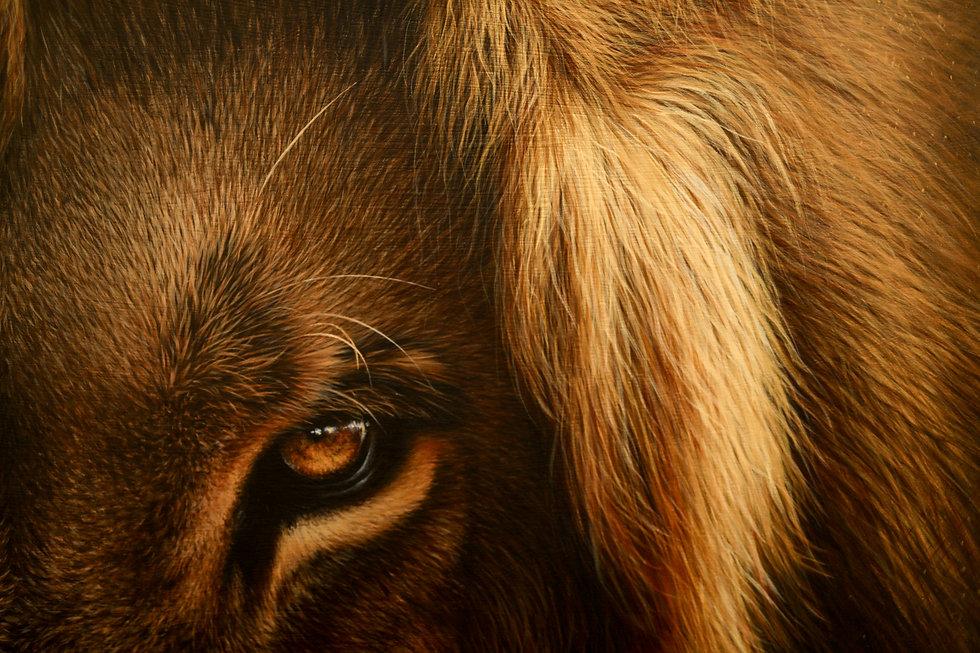 Lion eye close up large.jpg