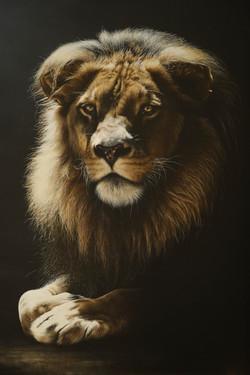 Lion Portrait Commission