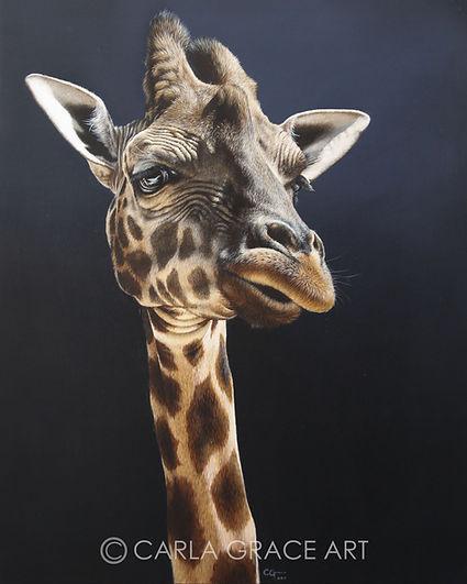 Giraffe Portrait Full Image Medium WATER