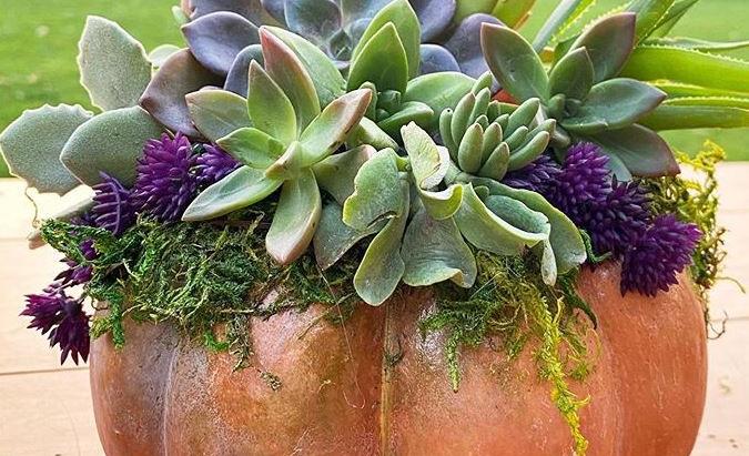 Purdy Succulent Pumpkins