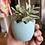 Thumbnail: Egg Planter with succulent - Fletchers Creek Concrete