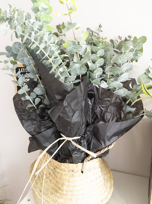 Small Eucalyptus Bunch