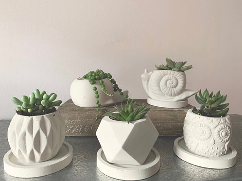 Small Planters - Fletchers Creek Concrete