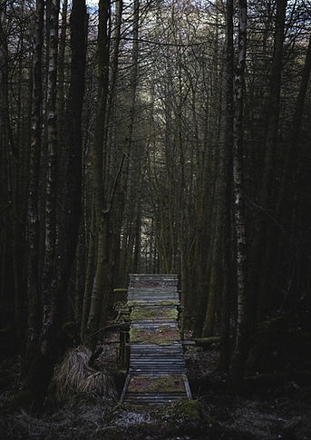 Wood_Feature.jpg