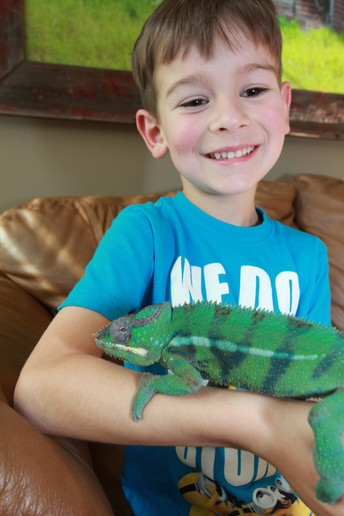Reptile Summer Camp