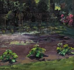 Garden June 15 - July 25