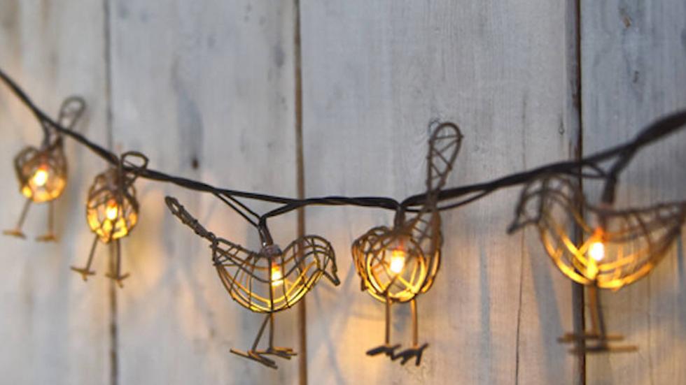 Robin lights