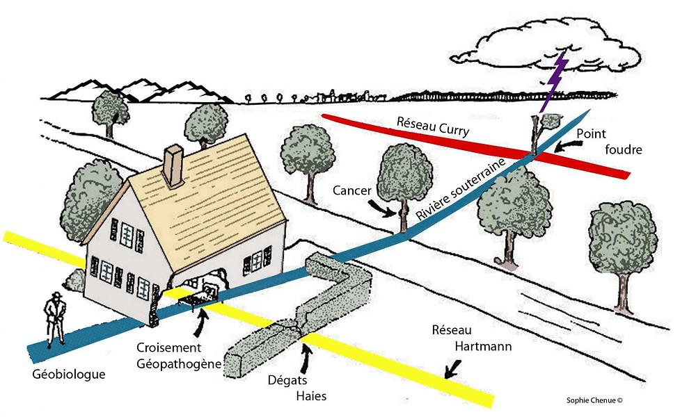 Formation géobiolgue