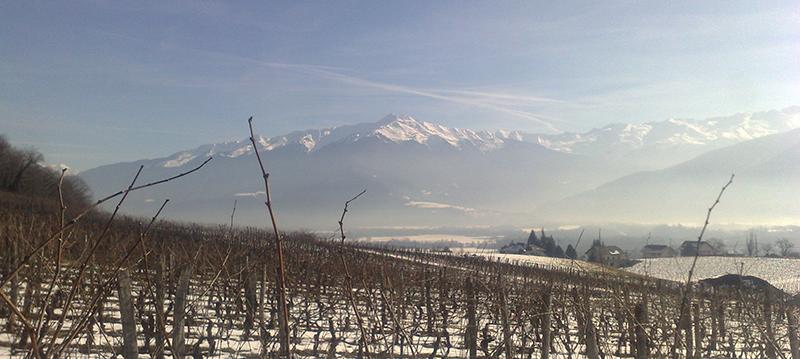 OENOCreativ | Reportage photographique Domaine viticole