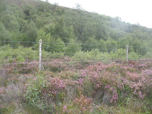 Assynt Foundation Land Management