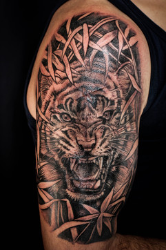 Tigre Jungle
