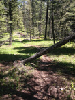 Another hazard tree!!