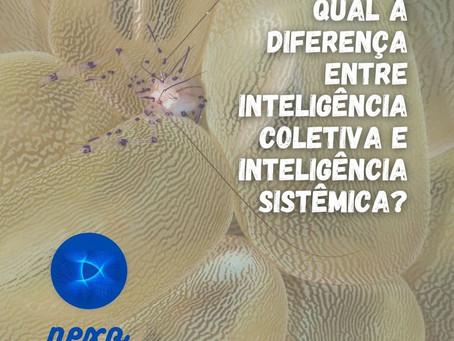 Qual a diferença entre Inteligência Coletiva e Inteligência Sistêmica?