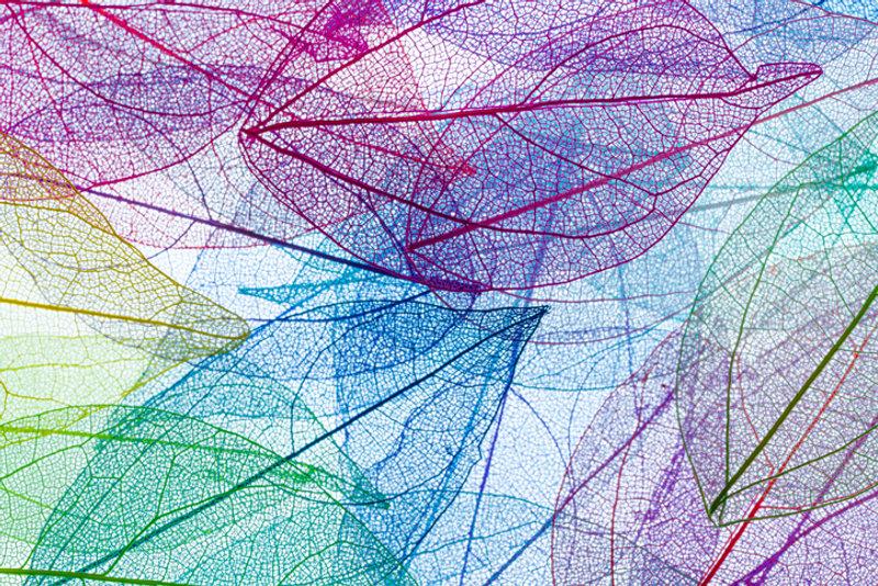 Cópia de esqueleto folhas coloridas.jpg